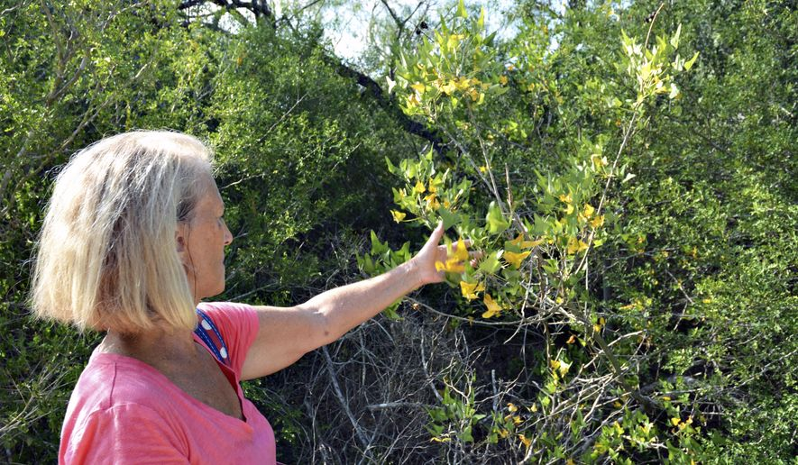 In this Sept. 22, 2017, photo, Anita Westervelt, a Texas Master Naturalist, points out a small tree during a tour on the Ebony Loop of Hugh Ramsey Nature Park in Harlingen, Texas. Westervelt and fellow naturalist Barbara Peet give free native plant tours twice a month. (Rick Kelley/Valley Morning Star via AP)