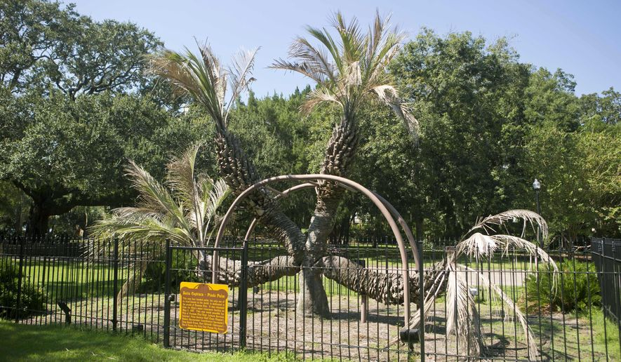 "This undated photo shows a one-of-a-kind four-headed palm tree in Oaks by the Bay Park in Panama City, Fla. The Palm is in ""irreversible decline"" and likely will be removed soon, city officials said. The unusual tree is 80 to 100 years old. City officials are brainstorming a replacement for the palm. The leading suggestion is to create a sculpture from wood. But Assistant City Manager Jared Jones says he's open to other ideas. (Joshua Boucher /News Herald via AP)"