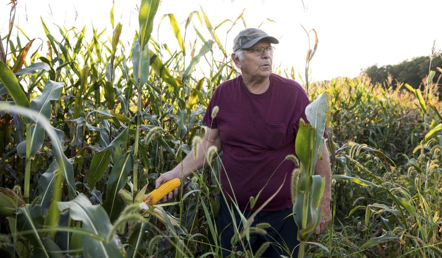 ADVANCE FOR THE WEEKEND OF SEPT. 30-OCT. 1 AND THEREAFTER - Farmer Andy Zagata checks his corn crop on a property in Huntington Twp, Pa. near Shickshinny on Wednesday, Sept. 20, 2017. The 69-year-old part-time farmer benefitted from incentives as part of a Luzerne Conservation District conservation farming program encouraging no-till farming and planting cover crops. (Christopher Dolan/The Citizens' Voice via AP)