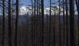 In this Wednesday, Sept. 27, 2017 photo, trees charred by a fire stand in the foreground in from of North Sister and Middle Sister in the background as seen from the drive into the Boy Scouts of America Oregon Trail Council's Camp Melakwa in the Willamette National Forest near McKenzie Bridge, Ore.  (Andy Nelson/The Register-Guard via AP)