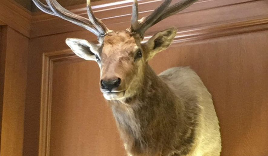 This undated photo provided by Christopher Scalia, shows an elk shot by Justice Antonin Scalia, that has remained in the new Justice Neil Gorsuch's chambers in the Supreme Court in Washington.  When Supreme Court Justice Neil Gorsuch got appointed to the Supreme Court bench earlier this year, he got lifetime tenure, a salary north of $250,000 and an elk named Leroy.  (Christopher J. Scalia by AP)