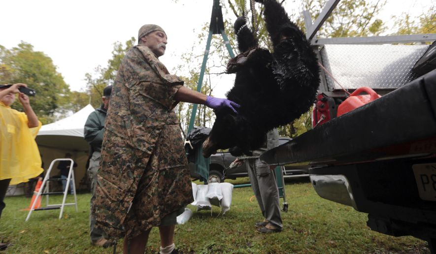 Greg Honachefsky, a volunteer wildlife technician, weighs the first hunted black bear checking in at the Whittingham Wildlife Managment Area during the first day of a six-day state black bear hunt Monday, Oct. 9, 2017, in Fredon, N.J. (Daniel Freel/The New Jersey Herald via AP)