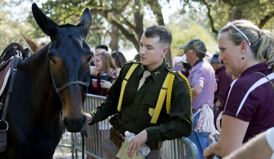 In this Saturday, Oct. 7, 2017 photo, Devin DeLuca, left, a member of Parsons Mounted Cavalry, talks with visitors curious about the cavalry's horses and mules at Spence Park in College Station, Texas. (Laura McKenzie /College Station Eagle via AP)