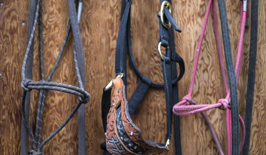 This Thursday, Sept. 21, 2017 photo shows tack inside an old shed on the Circle EW Ranch property in Moose, Wyo., which Liz McCabe's parents, Eli and Elsa Wiel, bought as a fishing camp in the 1930s. (Ryan Dorgan/Jackson Hole News & Guide via AP)