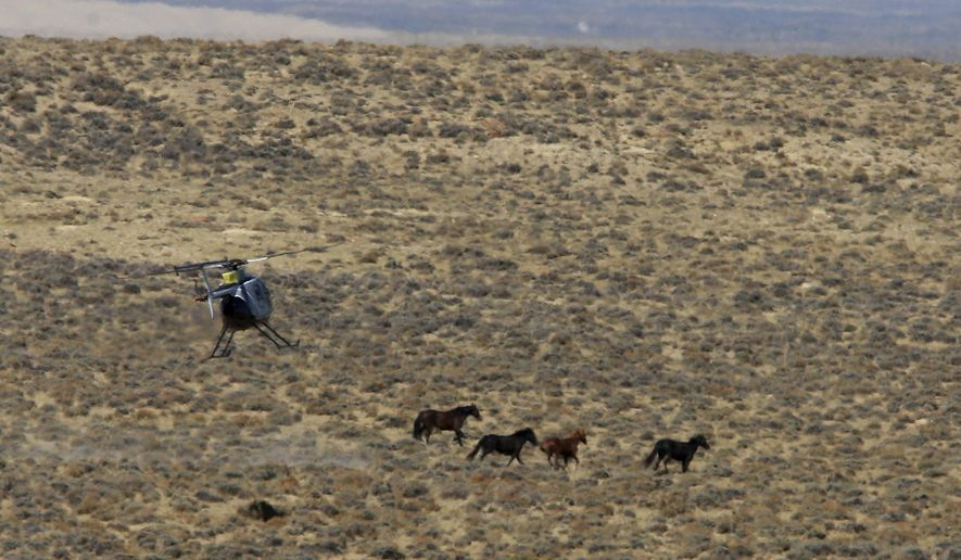FILE - In this Sept. 24, 2014, file photo, a helicopter pilot tries to turn a group of wild horses back toward a trap during a roundup in Sweetwater County, Wyo. A wild horse roundup continued in the desert of southwestern Wyoming after a judge declined to stop it during a lawsuit over how the animals are counted. (Alan Rogers/The Casper Star-Tribune via AP, File)