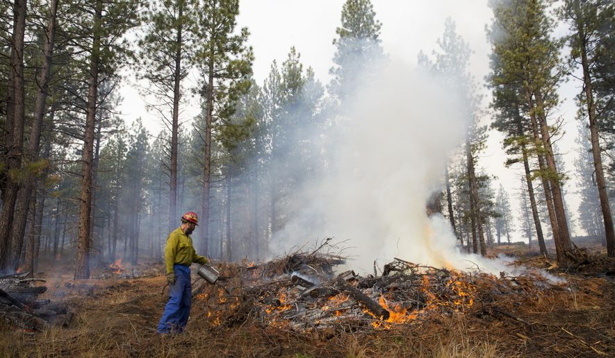 This Nov. 7, 2013, photo provided by the Deschutes Collaborative Forest Project shows an unidentified worker burning a pile of collected undergrowth in the Deschutes National Forest in central Oregon. The thinning of forests in central Oregon has saved homes amid one of the most devastating wildfire seasons in the American West. (Alexandra Steinmetz/Deschutes Collaborative Forest Project via AP)