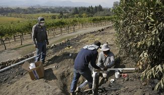 In this Monday, Oct. 16, 2017 photo, workers begin repairs to a damaged irrigation pipe at the wildfire-damaged Signorello Estate winery in Napa, Calif. Residents in California wine country are increasingly worried about the ability to pay their bills as wildfires drag on. The state's deadliest group of fires has left many business owners and employees without work or pay for nine days. Business communities are just returning to assess the effect on revenue and jobs. (AP Photo/Eric Risberg)