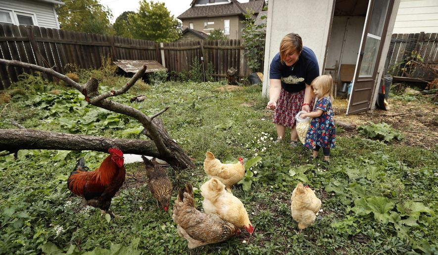 In this Tuesday, Sept. 26, 2017, photo, Tanya Keith, of Des Moines, Iowa, and her daughter Iolana feed their chickens in the backyard of their home, in Des Moines. The trend of raising backyard chickens is causing a soaring number of illnesses from poultry-related diseases. For Keith, the nine hens and a rooster that she keeps behind her home provide fresh eggs and lessons for her three children about where food comes from. But even as her kids collect eggs and help keep the six nesting boxes tidy, she warns them not get too affectionate. (AP Photo/Charlie Neibergall)