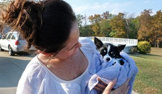 In this Oct. 9, 2017 photo, Tammi Craig founder of Gunners Run Rescue, dries off Monte, a  rescued dog, after doing some hydrotherapy with him at her home outside of Ruma, Ill. Craig said she places in a year as many dogs as some rescue organizations place in a month. Nevertheless, she said she has kept up with the exhausting and emotionally draining work out of a love of animals and to satisfy her need to do something, however small, to help make the world a bit brighter. (Byron Hetzler /The Southern, via AP)