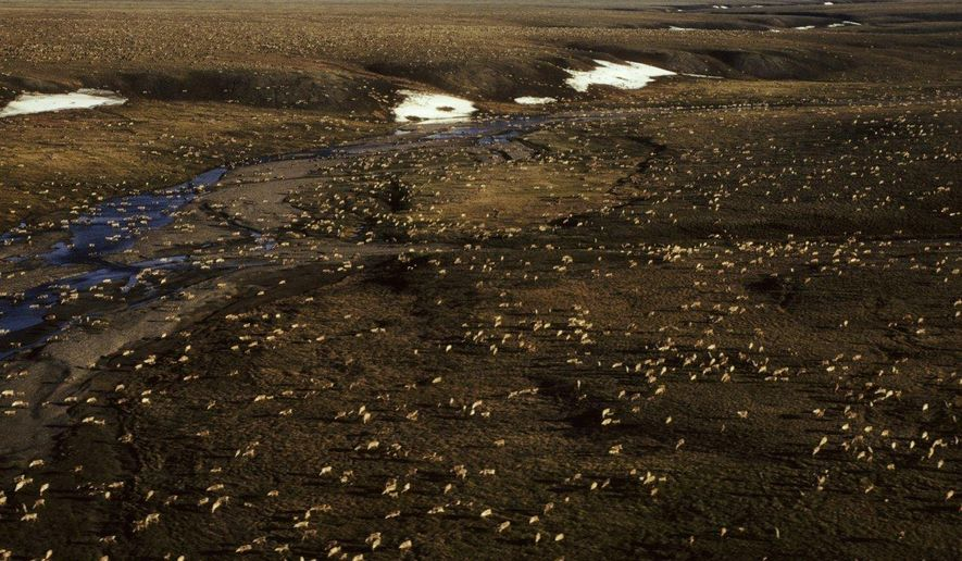 This undated aerial photo provided by U.S. Fish and Wildlife Service shows a herd of caribou on the Arctic National Wildlife Refuge in northeast Alaska. Congress is a step closer to opening Alaska's Arctic National Wildlife Refuge to oil and gas drilling. A budget measure approved by the Republican-controlled Senate allows Congress to pursue legislation allowing oil and gas exploration in the remote refuge on a majority vote. (U.S. Fish and Wildlife Service via AP)