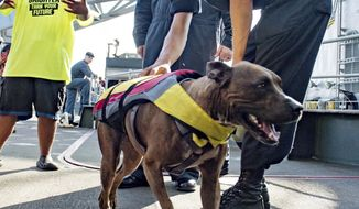 In this Wednesday, Oct. 25, 2017 photo, a sailor greets Zeus the dog with his owner Tasha Fuiaba, left, on the boat deck of the amphibious dock landing ship USS Ashland after she and one other Honolulu woman and their dogs were rescued after being lost at sea for several months while trying to sail from Hawaii to Tahiti. The U.S. Navy rescued the women on Wednesday after a Taiwanese fishing vessel spotted them about 900 miles southeast of Japan on Tuesday and alerted the U.S. Coast Guard. The women, identified by the Navy as Jennifer Appel and Tasha Fuiaba, lost their engine in bad weather in late May, but believed they could still reach Tahiti. (Mass Communication Specialist 3rd Class Jonathan Clay/U.S. Navy via AP)