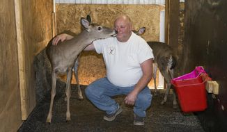 In this Oct. 3, 2017, photo, Rick Lowe is surrounded by several of his deer in Landisburg, Pa. They are being kept in an enclosure to collect urine. (Charles Fox/The Philadelphia Inquirer via AP)