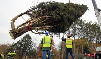 This year's Rockefeller Center Christmas tree, a 75-foot tall, 50-foot in diameter, Norway Spruce, weighing more than 12 tons, is moved to a flatbed truck after being cut from the yard of Jason Perrin in State College, Pa., Thursday, Nov. 9, 2017. The tree will be driven to Rockefeller Plaza in New York City, and put in place on Saturday, Nov. 11, from 8 a.m to 11a.m. in front of 30 Rockefeller Plaza. (AP Photo/Gene J. Puskar)