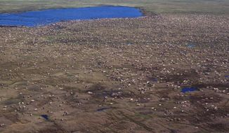 This aerial photo provided by U.S. Fish and Wildlife Service shows a herd of caribou on the Arctic National Wildlife Refuge in northeast Alaska. Alaska Sen. Lisa Murkowski says her legislation to open Alaska's Arctic National Wildlife Refuge to oil and gas drilling would generate $2 billion in royalties over the next decade _ with half the money going to her home state.  (U.S. Fish and Wildlife Service via AP)