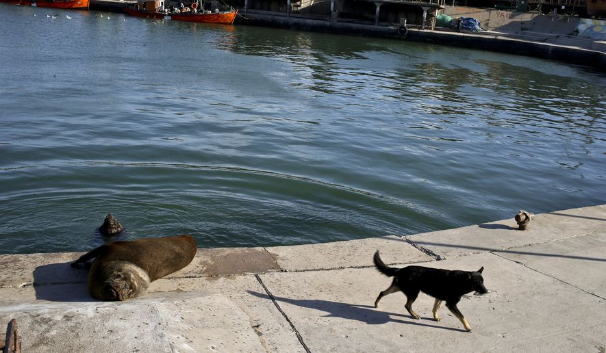 Dog Treats Making Dogs Sick