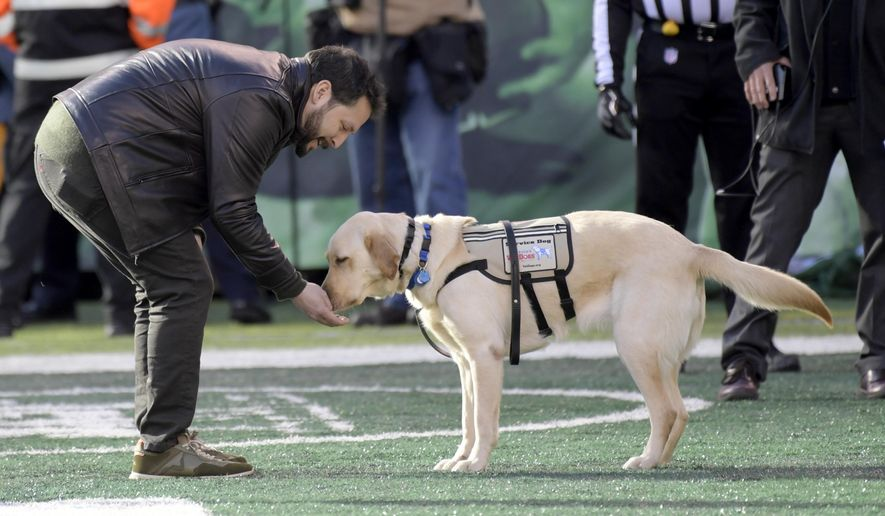"""FILE - In this Sunday, Nov. 26, 2017, file photo, a U.S. Army veteran named Rodney is gifted Maggie, a yellow Labrador retriever service dog, during the first half of an NFL football game between the New York Jets and the Carolina Panthers in East Rutherford, N.J. The The Jets partnered with America's VetDogs as part of the team's """"Salute to Service"""" events. (AP Photo/Bill Kostroun, File)"""