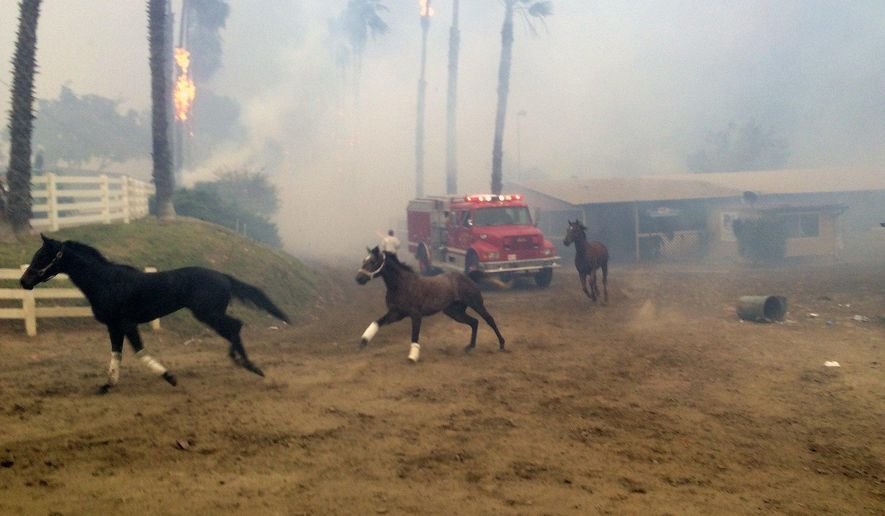 Terrified horses gallop from San Luis Rey Downs as the Lilac Fire sweeps through the horse-training facility, Thursday, Dec. 7, 2017 in San Diego. (Paul Sisson/The San Diego Union-Tribune via AP)