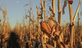 A corn field is seen near Schyler, Neb., in this Nov. 30, 2017. The federal Drug Enforcement Administration announced on June 7, 2018 it would open an Omaha field office to help combat the opiod epidemic in Nebraska and neighboring plains states. (AP Photo/Nati Harnik)