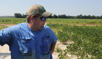 FILE - In this Tuesday, July 11, 2017, file photo, East Arkansas soybean farmer Reed Storey looks at his field in Marvell, Ark. Storey said half of his soybean crop has shown damage from dicamba, an herbicide that has drifted onto unprotected fields and spawned hundreds of complaints from farmers. Minnesota has announced restrictions on the use of the herbicide dicamba for 2018 in response to complaints by soybean growers across the country that it harmed their crops this year. The Minnesota Department of Agriculture on Tuesday, Dec. 12, 2017 set a June 20 cut-off date for applying the herbicide. (AP Photo/Andrew DeMillo, File)