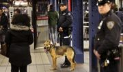 The attempted New York City subway bombing last month was one of several recent cases that involved suspects who gained admittance to the U.S. because of chain migration. (Associated Press/File)