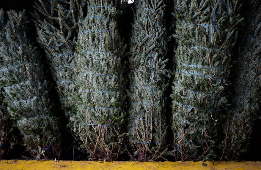 In this Friday, Dec. 8, 2017 photo, wrapped Christmas trees stand waiting for buyers at the Kinsey Family Farm in Gainesville, Ga. (Nick Bowman/The Times via AP)