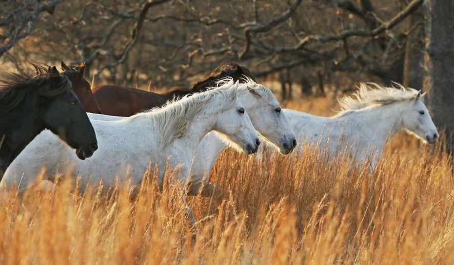 13 2017 Photo Wild Horses Run Through The