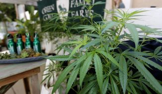 """In this Sept. 28, 2017, file photo, Marijuana plants are displayed at the Green Goat Family Farms stand at """"The State of Cannabis,"""" a California industry group meeting in Long Beach, Calif. (AP Photo/Damian Dovarganes, File)"""