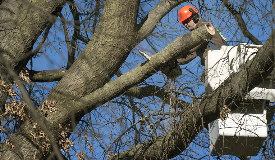 ADVANCE FOR USE SATURDAY, JAN. 6 -  In this Friday, Dec. 15, 2017 photo, City Arborist Alex Paul trims a massive pin oak tree on the 3200 block of Plymouth Avenue in Lincoln, Neb. Lincoln's Parks and Recreation Department's slim staffing was part of a recent City Council discussion after several residents filed claims for damage caused by limbs, or whole trees, which fell during the late August windstorm. (Eric Gregory/The Journal-Star via AP)