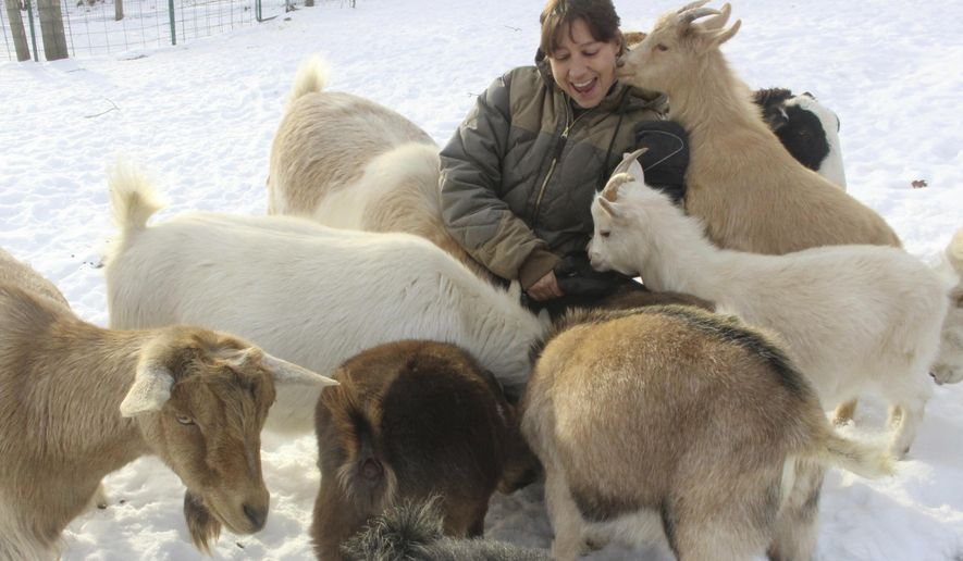 In this c, Tracy Longoria plays with goats at her Aussakita Acres farm in Manchester, Conn. The farm is partnering with the Hartford Yard Goats, the Double-A affiliate of the Colorado Rockies baseball team to offer goat yoga at Dunkin Donuts Park, the team's $71 million stadium in Hartford. (AP Photo/Pat Eaton-Robb)