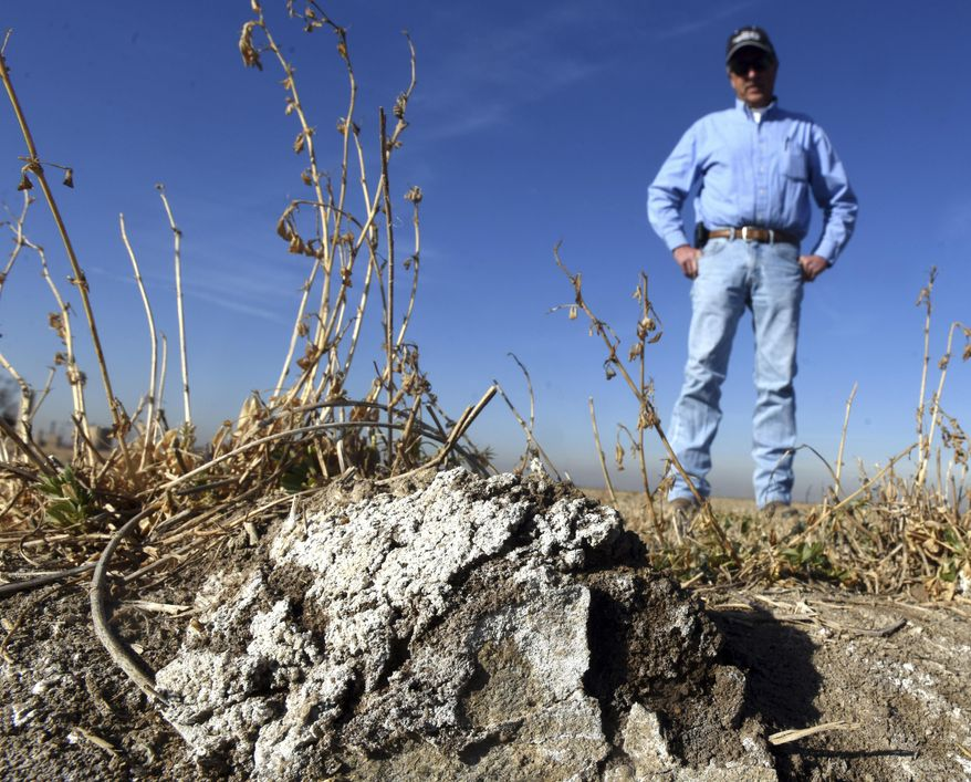 In a Dec. 19, 2017 photo, Harry Strohauer stands near one of the damaged areas in his field east of LaSalle, Colo. As a result of high ground water Strohauer has seen salt deposits like this form on the field, killing the crops in those sections.(Joshua Polson/The Greeley Tribune via AP)