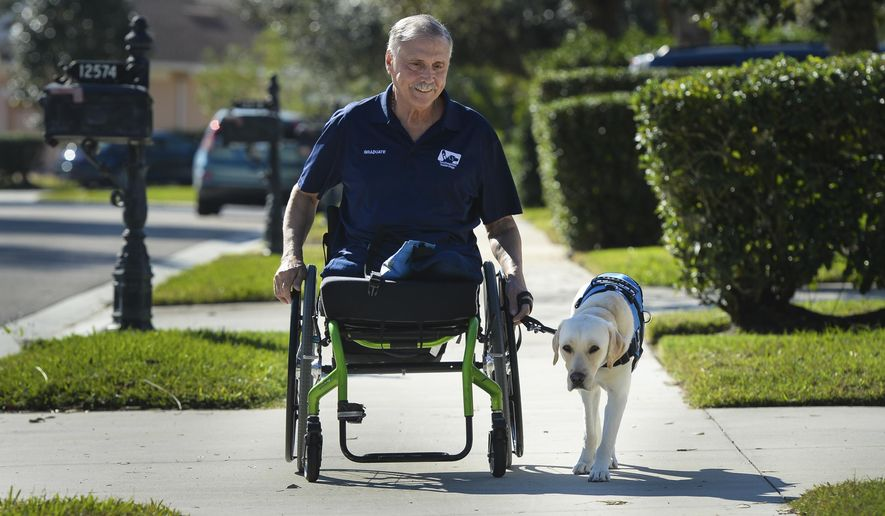 ADVANCE FOR USE SUNDAY, JAN. 14 - In this Dec. 28, 2017 photo, Vietnam veteran Bob Calderon strolls through his Bradenton, Fla., neighborhood with his guide dog, Mae. (Dan Wagner/Sarasota Herald-Tribune via AP)
