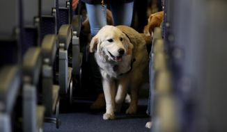 FILE - In this April 1, 2017 file photo, a service dog strolls through the isle inside a United Airlines plane at Newark Liberty International Airport while taking part in a training exercise, in Newark, N.J. Delta Air Lines says for safety reasons it will require owners of service and support animals to provide more information before their animal can fly in the passenger cabin, including an assurance that it's trained to behave itself.  (AP Photo/Julio Cortez, File)