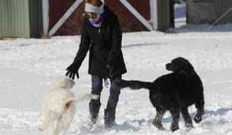 "Labradoodles Eva and Adam play with owner Susan Chester at her home near Vineyard Lake in Norvell Township, Mich., on Thursday, Jan. 18, 2017.  On Jan. 13, the dogs pointed out a fallen elderly woman on the ground, freezing with nothing on but a night gown. ""It could have been a tragic outcome had Adam and Eva not woken us,"" Susan said. ""I don't know how they knew she was out there.""  (J. Scott Park /Jackson Citizen Patriot via AP)"