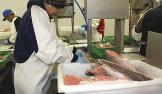 Abraham Benevides processes salmon fillets at the Copper River Seafoods plant on Ship Creek in Downtown Anchorage, Alaska, on Jan. 8, 2018. Not known as a hub of processing in Alaska, the Anchorage facility is employing 100 year-round workers to help supply Walmart and Sam's Club with a quarter-million pounds of Alaska salmon per year. (Naomi Klouda/Alaska Journal of Commerce via AP)