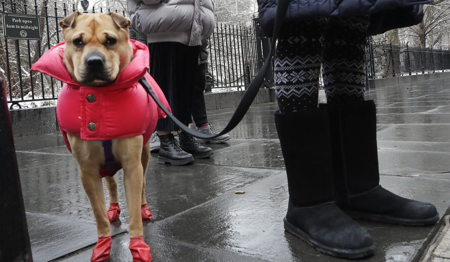 A dog is dressed for the weather - with a puffer coat and rubber boots - while walking on a cold, wet morning, Tuesday, Jan. 30, 2018 in New York. (AP Photo/Mark Lennihan)