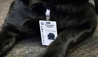 In this Jan. 17, 2018 photo, Gibson, a 2 1/2-year-old black lab, who is a trained facility dog and  a calming presence for nervous witnesses or victims of abuse rests in the Sangamon County State's Attorney's Office in Springfield, Ill. He joined the staff of the State's Attorney's Office last summer and wears a vest when working and a county employee id. Diane Bell, left director of victim services in the office, and victim advocates Tami Richmond and Holli Gleason are trained to work with Gibson. (Rich Saal/The State Journal-Register via AP)