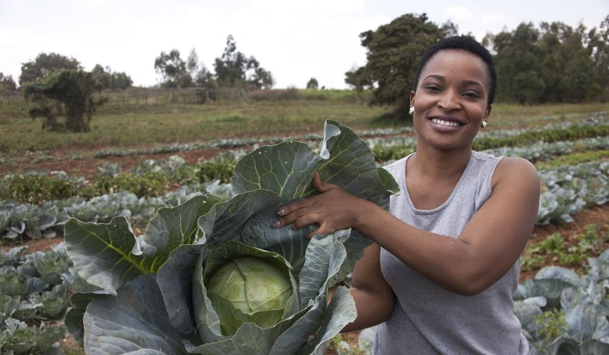 In this Jan. 17, 2018, photo, former reality show contestant Leah Wangari shows cabbages at an agricultural training farm in Limuru, near the capital Nairobi, in Kenya. An unusual new reality TV show backed by the U.S. government is the first of its kind in Africa, training young adults from Kenya and neighboring Tanzania in farming and giving them plots to cultivate, with a $10,000 prize for the most productive. (AP Photo/Sayyid Abdul Azim)