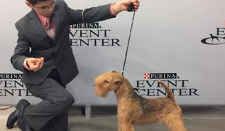 In this Sept. 2017 photo provided by Alysha Towell, eleven-year-old Fenric Towell kneels with his Lakeland terrier, Missy, on lead, at Purina Farms in Grey Summit, Mo. The Westminster Kennel Club competition is best known for the dog crowned Best in Show, but it's also a showcase for young handlers who sometimes go up against grown-ups. (Alysha Towell via AP)