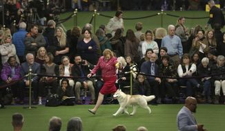 A Siberian husky competes during the 142nd Westminster Kennel Club Dog Show in New York, Tuesday, Feb. 13, 2018. (AP Photo/Seth Wenig)