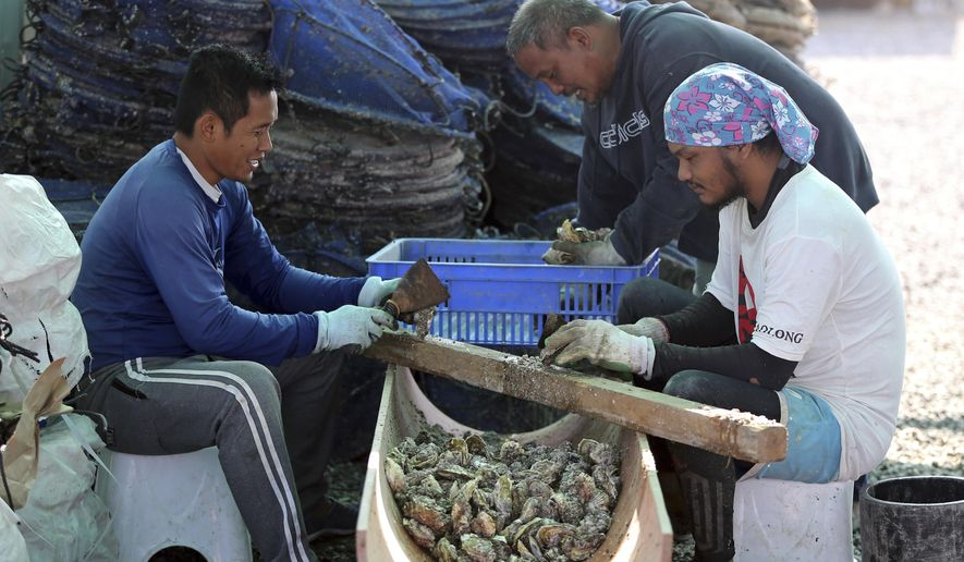 In this Jan. 16, 2018 photo, employees clean oyster shells at the Dibba Bay Oyster Farm's harvesting and processing facilities, in Dibba, United Arab Emirates. The waters of the Persian Gulf have long been home to pearl oysters. Now, off the shores of the Fujairah, an emirate with a coastline that juts out into the Gulf of Oman, a new type of oyster is thriving -- the edible kind. (AP Photo/Kamran Jebreili).