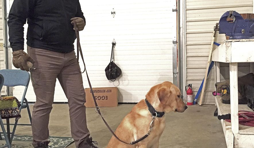 ADVANCE FOR USE SATURDAY, FEB. 24, AND THEREAFTER - In this Tuesday, Feb. 13, 2018 photo, James Walstrom, the owner of Keystone K-9 and Security and a former police officer in Altoona, Pa., holds the leash of an electronic storage detection dog named Kimo, as the dog alerts his handler of a computer thumb drive's location by sitting and staring at the hidden object during a training session in Hollidaysburg, Pa. Electronic storage detection dogs, or ESD dogs, are specially trained to sniff out devices such as USB drives, cellphones, SD cards, computers and other electronics, making them helpful for investigations of child pornography, drug dealing, terrorism and other cybercrimes. (Shen Wu Tan/Altoona Mirror via AP)
