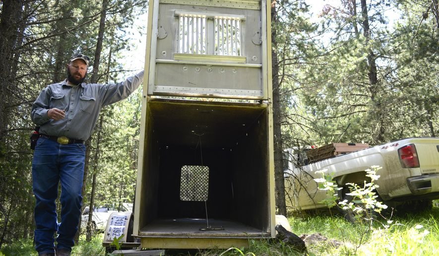 In a July 6, 2017 photo, Chad Dickinson, a biological science technician for the Grizzly Bear Study Team, explains how a grizzly bear trap works, in the Gravelly Mountain Range. (Rachel Leathe/Bozeman Daily Chronicle via AP)
