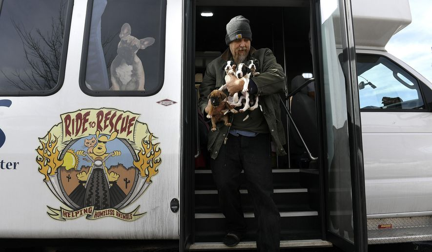 In a Jan. 31, 2018 photo, PAAS (Peaceful Animal Adoption Shelter) volunteer Jim Snipes brings an armload of puppies off of their van as they arrive at the Denver Dumb Friends League Buddy Center on January 31, 2018 in Castle Rock, Colorado. After a 14 hour overnight van ride from Vinita, Oklahoma, the dogs are checked into the Buddy Center. There they get weighed, are given vaccines, get health evaluations and fed. Once the dog is ready they will be put up for adoption. PAAS, a relatively new organization in Vinita, Oklahoma, brings 30-50 homeless animals a week to the Buddy Center in hopes of finding them new homes. (Helen H. Richardson/The Denver Post via AP)