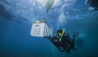 In this In Feb. 28, 2018, photo, diver and Force Blue Co-Founder Rudy Reyes handles a crate full of coral to replace corals ripped off the reef during Hurricane Maria, as part of a nearly $1.5 million coral reef restoration effort largely funded by the federal government, off the coast of Fajardo, Puerto Rico. The group is focusing on the island's northeast region, where swaths of mostly elkhorn and staghorn corals received the brunt of large swells generated during the hurricane. (Jim Hellemn via AP)