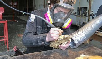 This March 1, 2018 photo shows artist Jason Borders carving a pattern into a black bear skull in his Rose Valley shed east of Longview, Wash. Borders, who moved from Portland to Rose Valley nine months ago, uses a drill to carve on animal skulls of all sizes. The intricate, geometric patterns he etches and drills into the bleached bone make the carvings look like white embroidered lace.  (Jackson Hogan/The Daily News via AP)