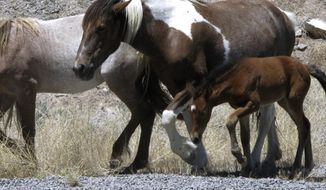 FILE - In this June, 2015 file photo, free-roaming horses owned by the state of Nevada walk along the USA Parkway at the Tahoe Reno Industrial Center. Nevada developer Lance Gilman has joined leaders of the American Wild Horse Campaign to announce new legal action challenging the state's plans to transfer ownership of thousands of free-roaming horses to private owners, including some that currently graze at Gilman's industrial park east of Sparks where Tesla's giant battery factory is based near U.S. Interstate 80. (AP Photo/Scott Sonner, file)