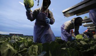 "In this March 6, 2018 picture, farmworker Santiago Martinez, of Mexicali, Mexico, picks cabbage before dawn in a field outside of Calexico, Calif. For decades, cross-border commuters have picked lettuce, carrots, broccoli, onions, cauliflower and other vegetables that make California's Imperial Valley ""America's Salad Bowl"" from December through March. As Trump visits the border for the first time as president on Tuesday, March 13, the harvest is a reminder of how little has changed despite heated rhetoric in Washington. (AP Photo/Gregory Bull)"