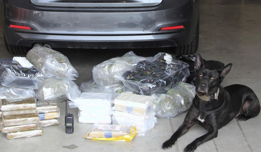 """This Tuesday, March 13, 2018, photo released by the Yavapai County Sheriff's Office shows a dog """"Vader,"""" a north-central Arizona specially trained police dog, who helped them find a load of cocaine and marijuana inside a BMW sedan driven by a 20-year-old Texas man they arrested during a traffic stop. (Yavapai County Sheriff's Office via AP) ** FILE **"""