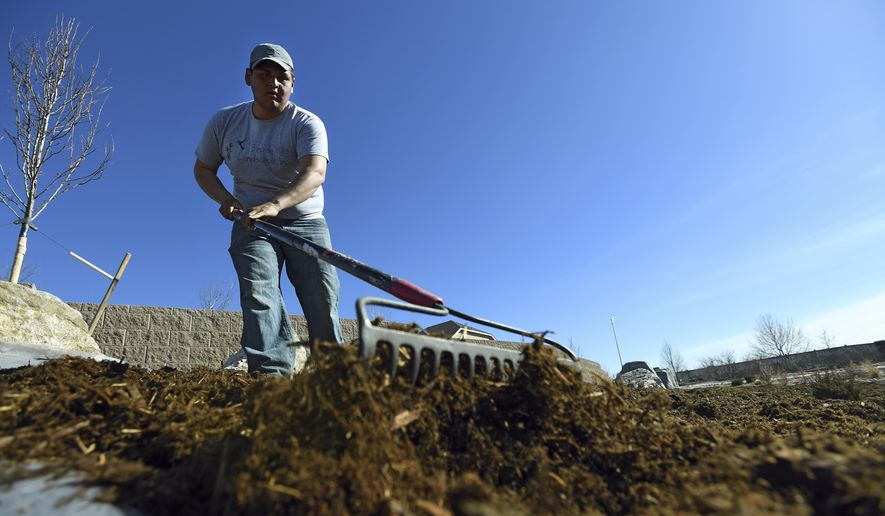 Juan Herrera of Singing Hill Landscape moves mulch around as he works on a park at the Riverdale Dunes community on March 7, 2018 in Commerce City, Colorado. Landscapers rely heavily on the H-2B visa program for peak season help. There were 33,000 visas offered and 100,000 applications. Unlike in prior years, the DOL went to a lottery system. A majority of landscapers won't get their workers unless Congress passes a fix. Colorado is one of the heaviest users of the program given its seasonal climate. (John Leyba/The Denver Post via AP) **FILE**