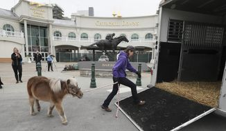 In this Monday, March 5, 2018 photo, Kentucky Derby Museum equine manager Alison Knight leads Winston, a miniature horse who has been a resident of the museum for 22 years, to a horse van in Louisville, Ky. The Museum recently announced that it will undergo a $6.5 million expansion. Winston has now retired to the Old Friends Thoroughbred Retirement Farm in Georgetown, Ky. (Michael Clevenger/Courier Journal via AP)